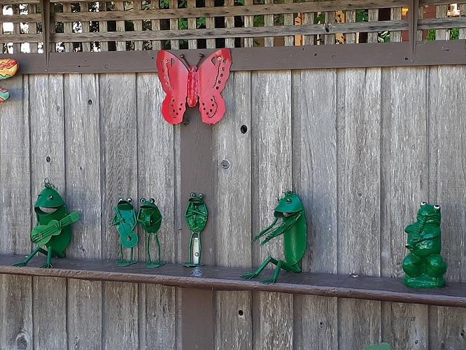 frogs cvhs