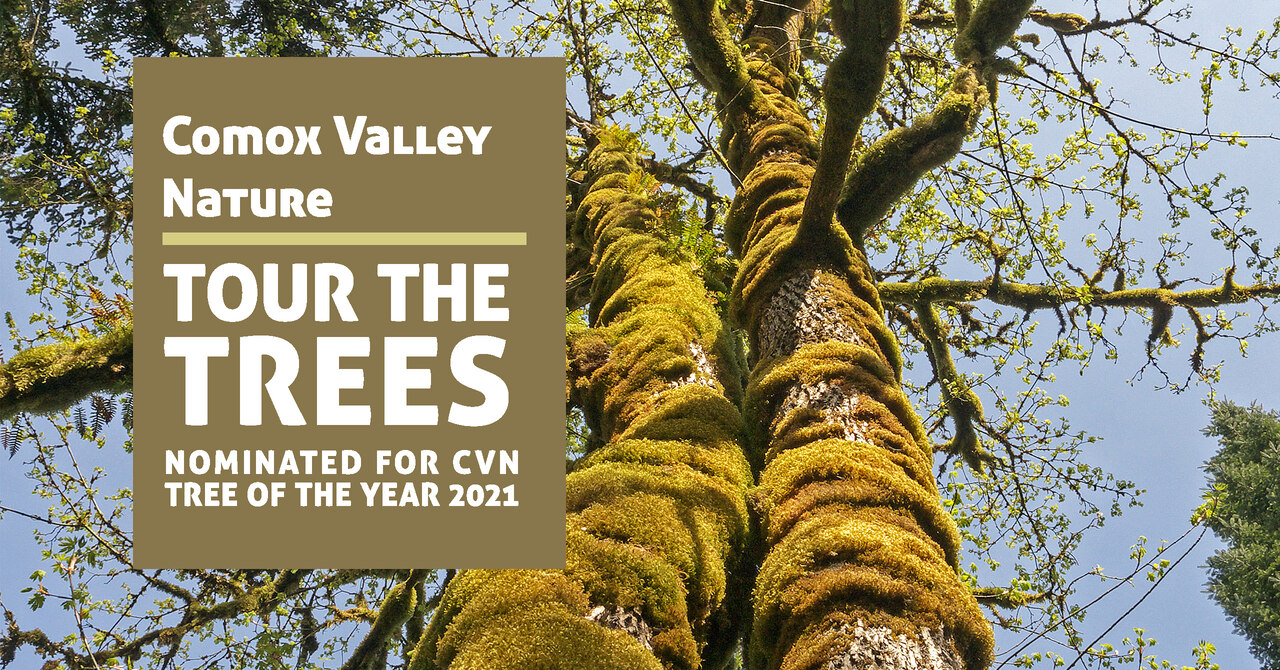 Tree of the Year FB Event Header Vote